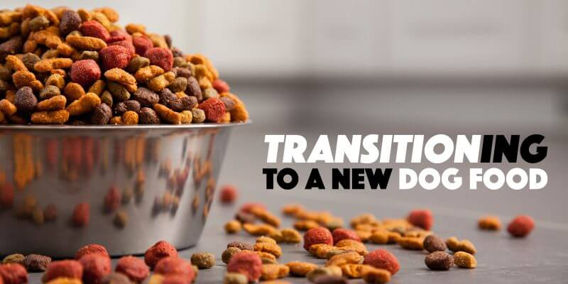 How To Transition Your Dog To a New Dog Food