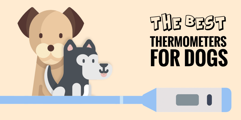 Best Dog Thermometers