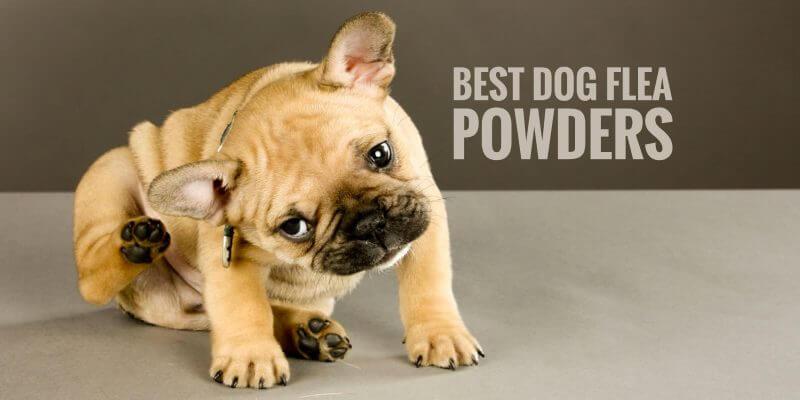 Best Dog Flea Powders