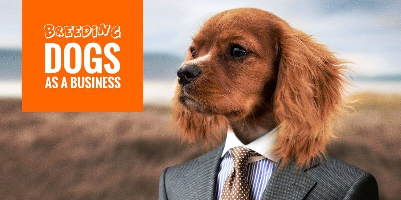 breeding dogs as a business