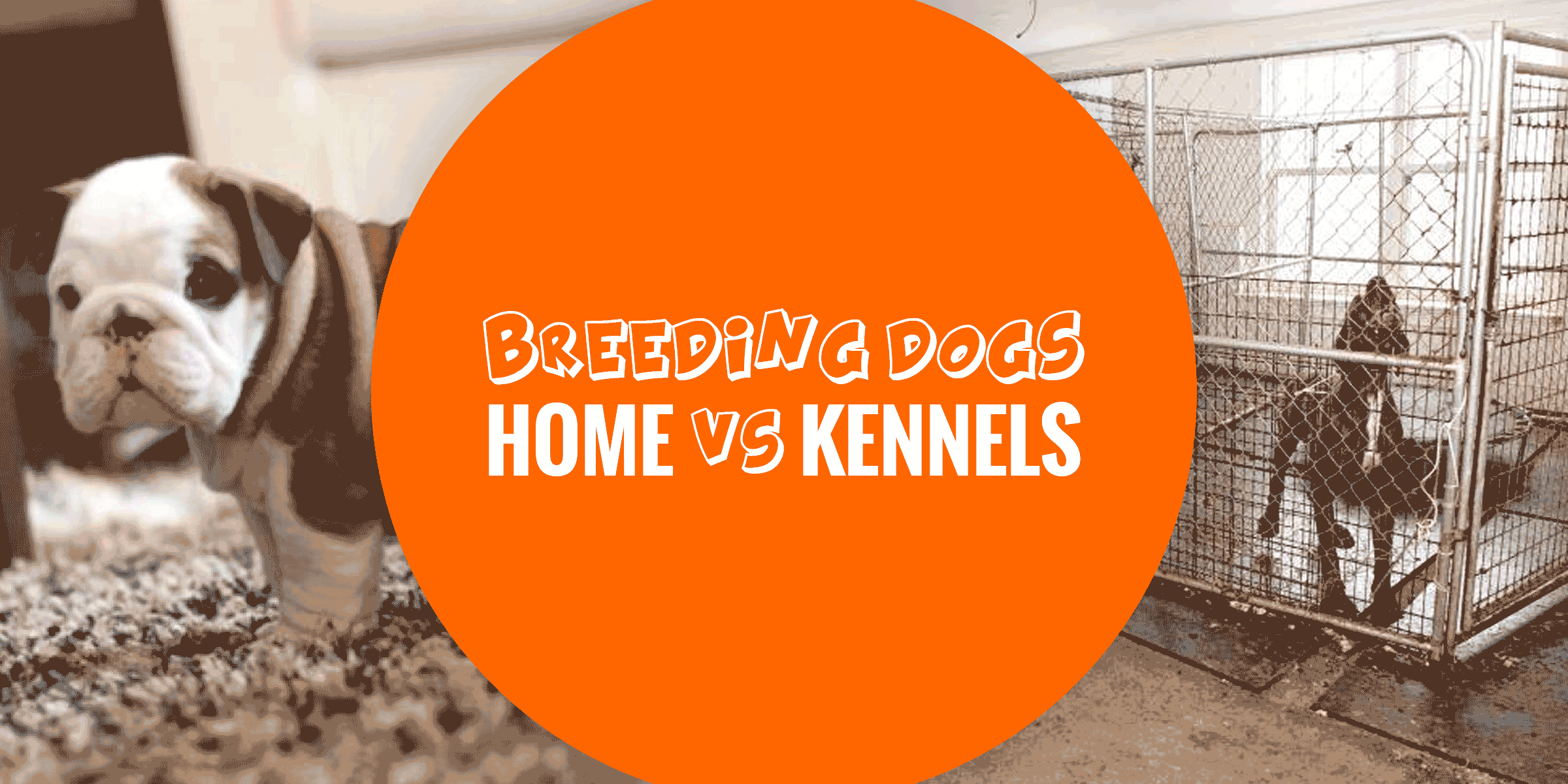 Breeding Dogs At Home Or Using Outdoor Kennels