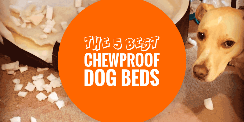 Best Chewproof Dog Beds