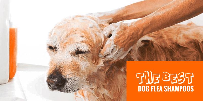 Best Dog Flea Shampoos