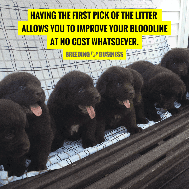 first pick of the litter for dog breeders