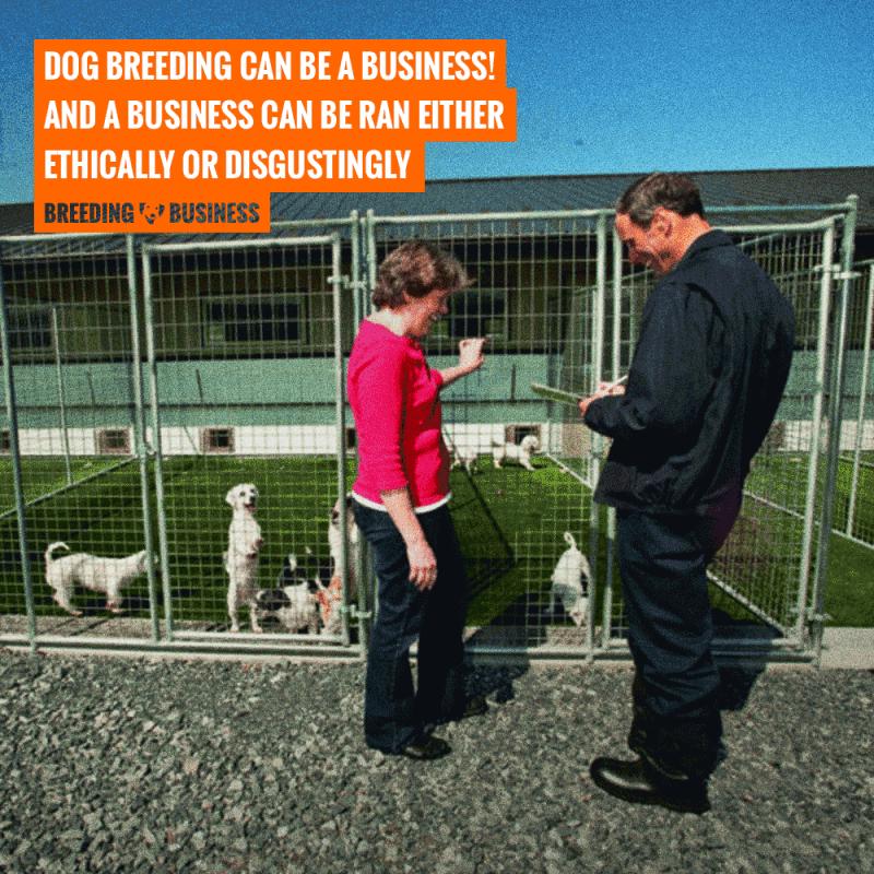 is dog breeding a business