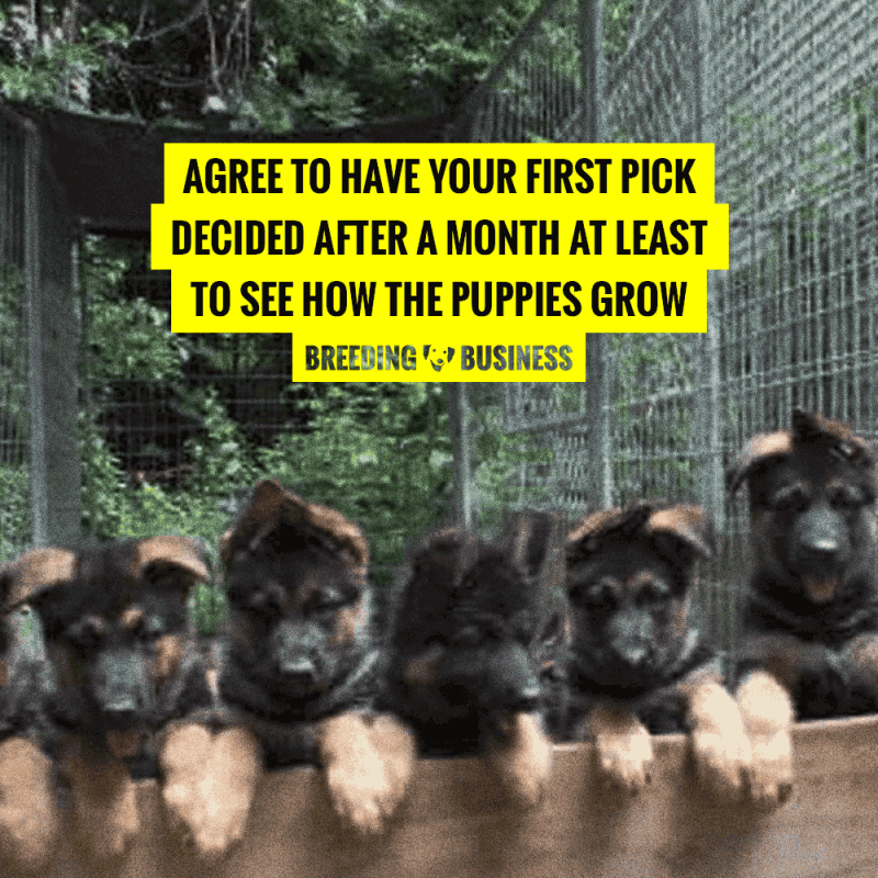 when to decide for the first pick of a litter