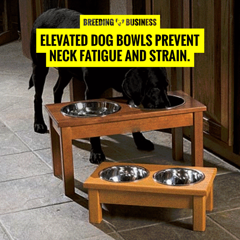 raised dog bowls promote good posture