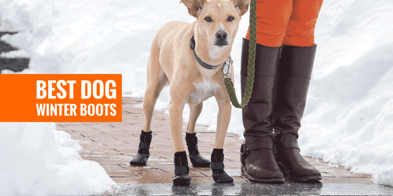 Top 6 Best Dog Winter Boots, Paw