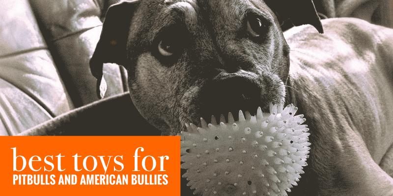 10 Best Toys For Pitbulls & American Bullies