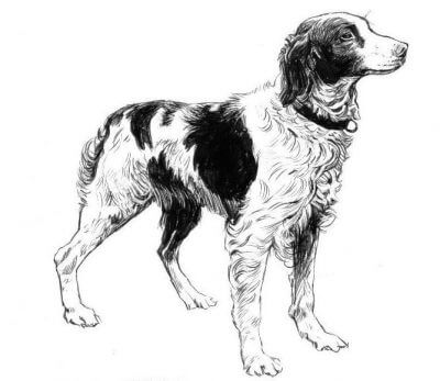 Brittany dog drawing
