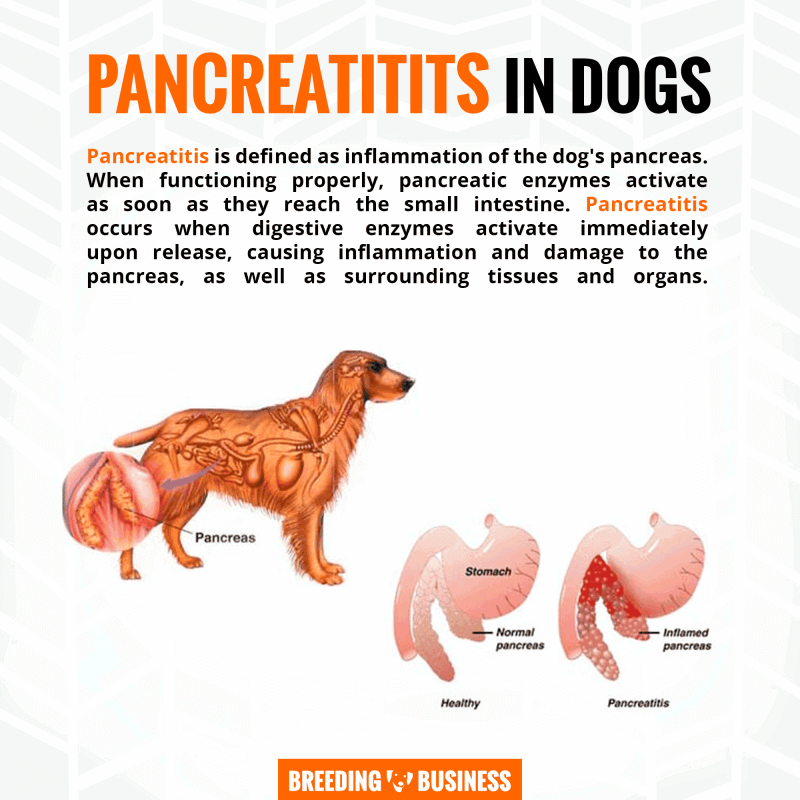 pancreatitis and digestive enzymes in dogs