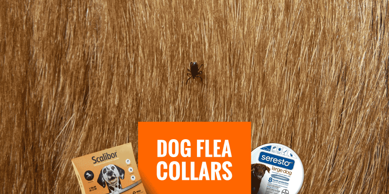 Top 5 Best Dog Flea Collars with Free Guide!