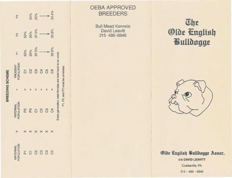 Olde English Bulldogge scheme by david leavitt