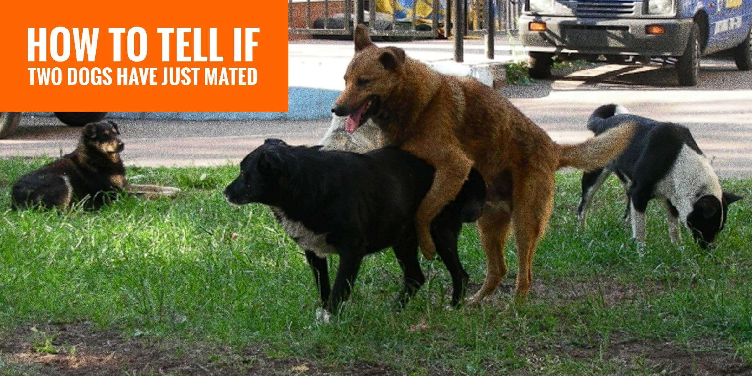 How To Tell If Two Dogs Have Mated  8 Signs Dogs Have -9567