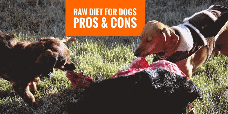 benefits and disadvantages of a raw diet for dogs