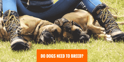 Do Dogs Need To Breed?