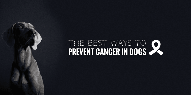 cancer prevention for dogs