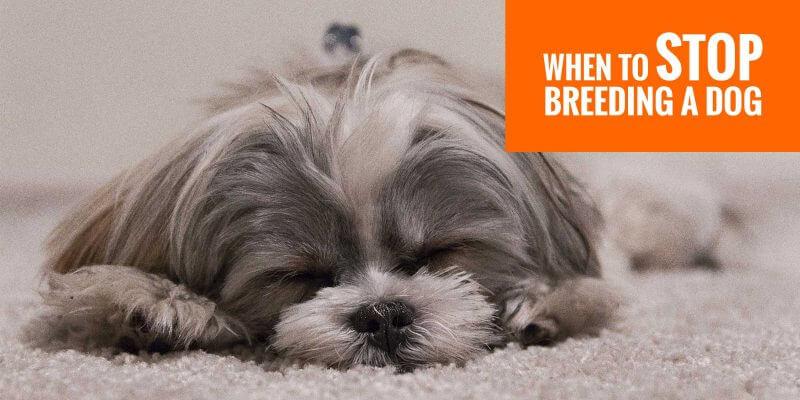 When To Stop Breeding A Dog Fertility Health Age Progress