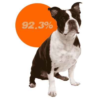 Boston Terrier c-sections