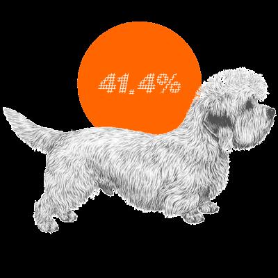 Dandie Dinmont Terrier c-sections