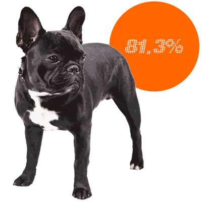 French Bulldog c-sections