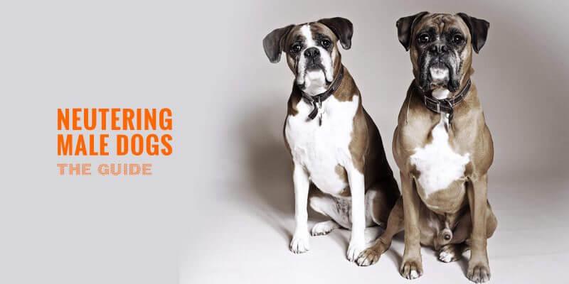 neutering male dogs