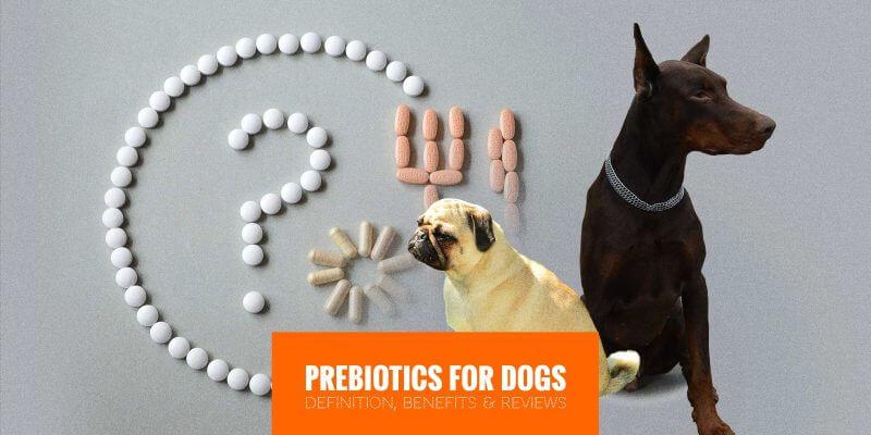 Prebiotics for Dogs
