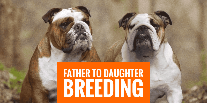 breeding father to daughter dogs
