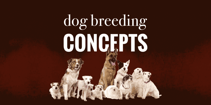 dog breeding concepts