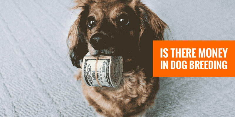 is there money in dog breeding