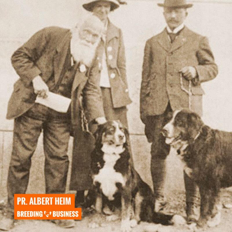 professor albert heim bernese mountain dog history