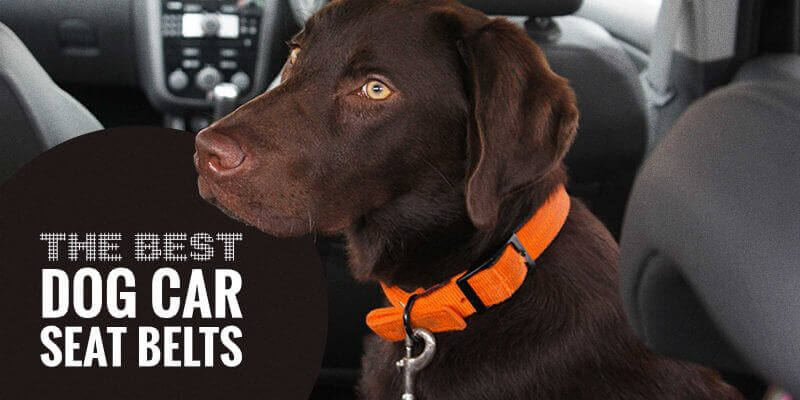 Best Dog Car Seat Belts (Reviews)
