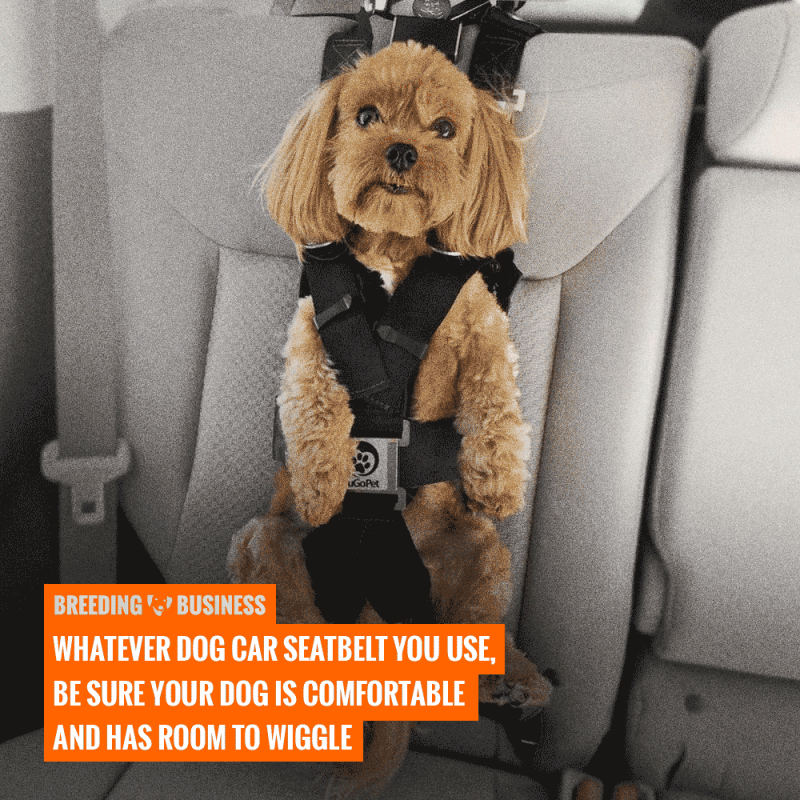 ideal size of a dog car seat belt