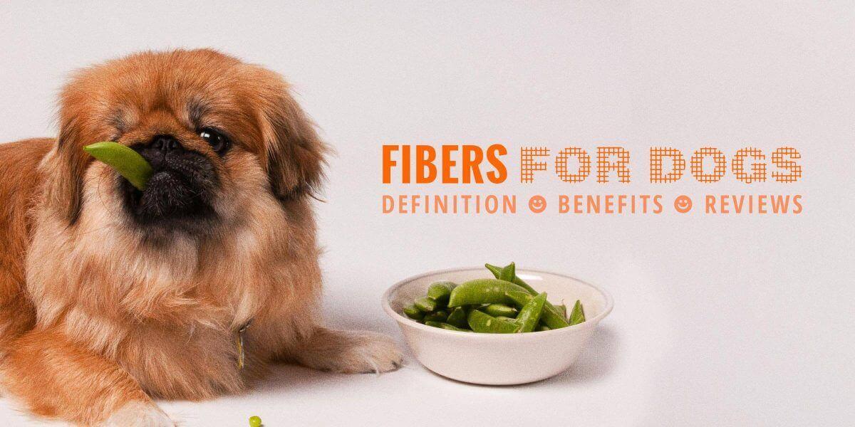 Fibers for Dogs — Definition, FAQ