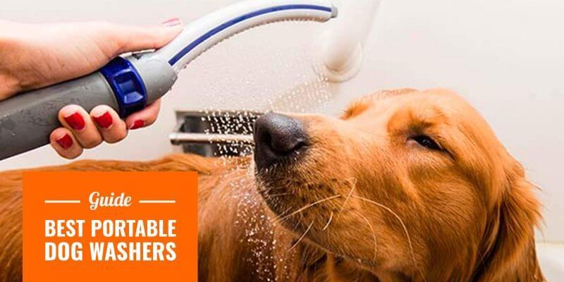 best portable dog washers