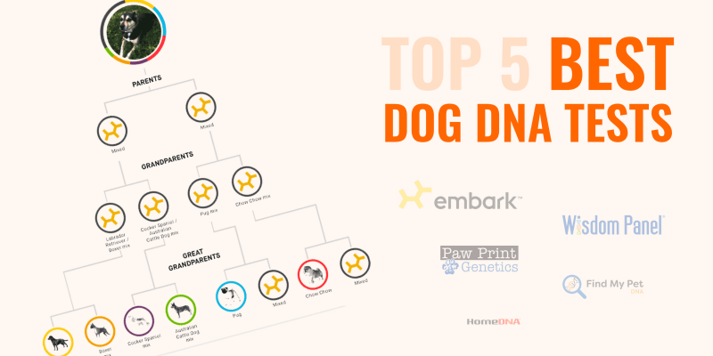 Top 5 Best Dog DNA Tests — Breed Profiling, Health Screenings & More