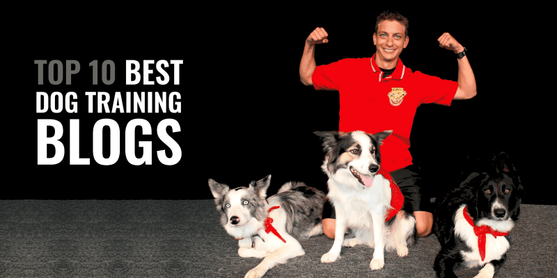 best dog training blogger (zak george, kikopup, cesar millan)