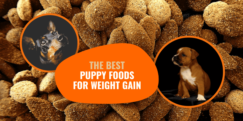 Best Puppy Foods for Weight Gain