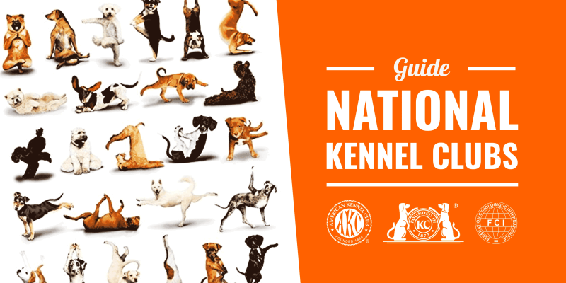 National Kennel Clubs
