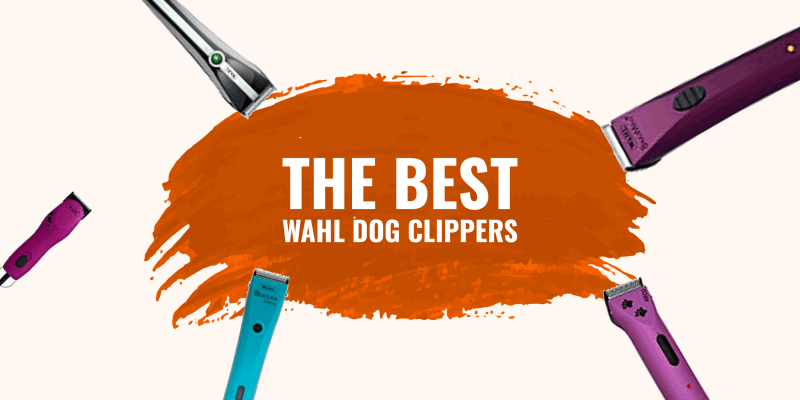 Review of the best Wahl dog clippers