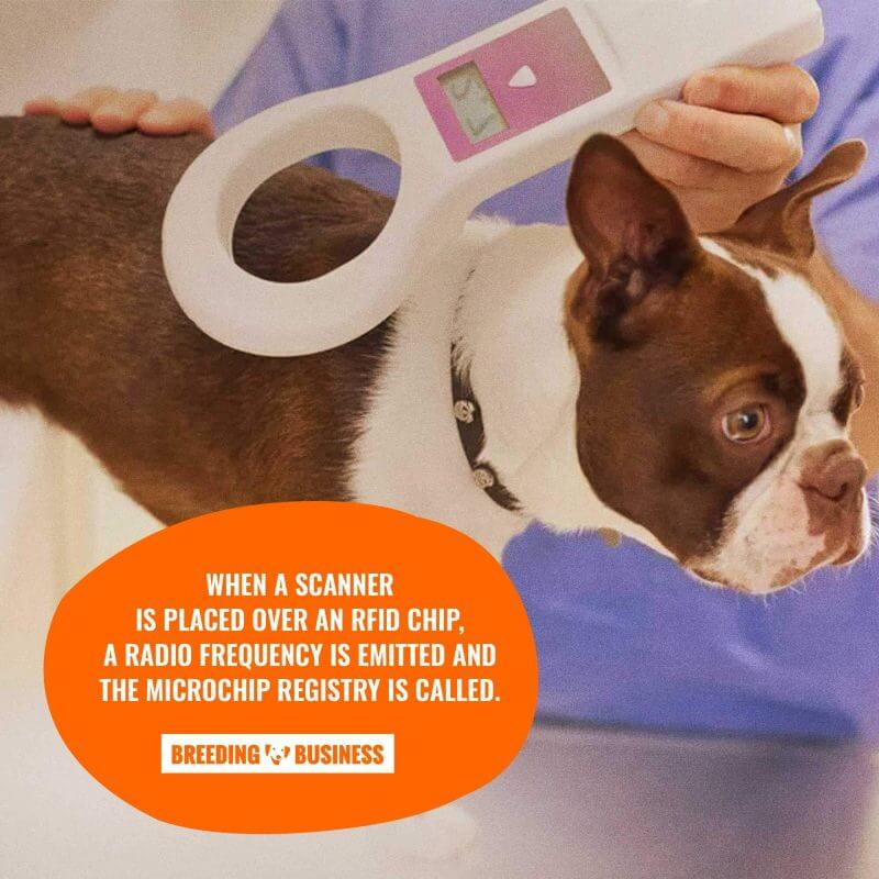 veterinarian scanning an RFID chip for dogs