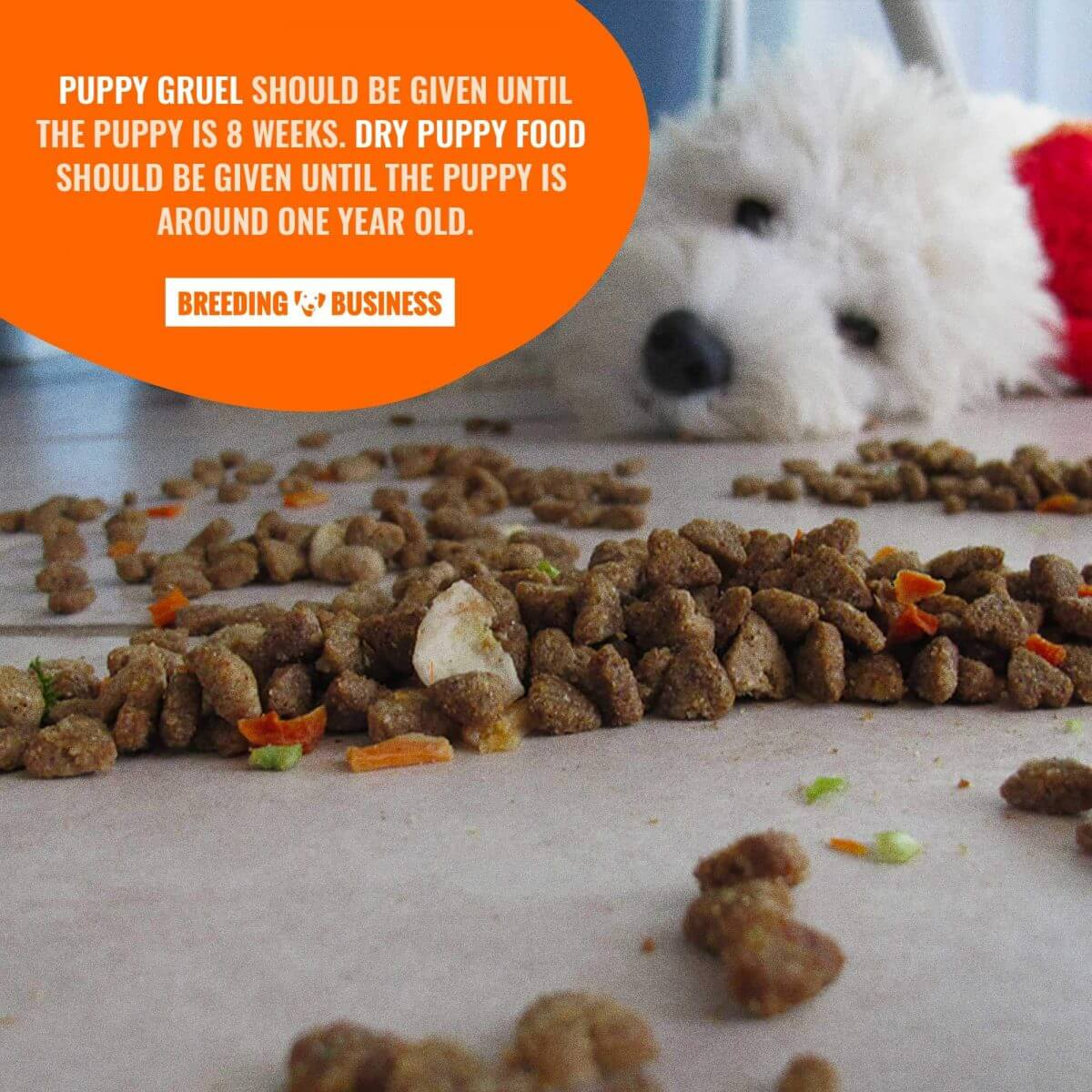 when to stop giving gruel and feeding puppy food