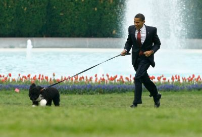 Barack Obama and his Portuguese Water Dog