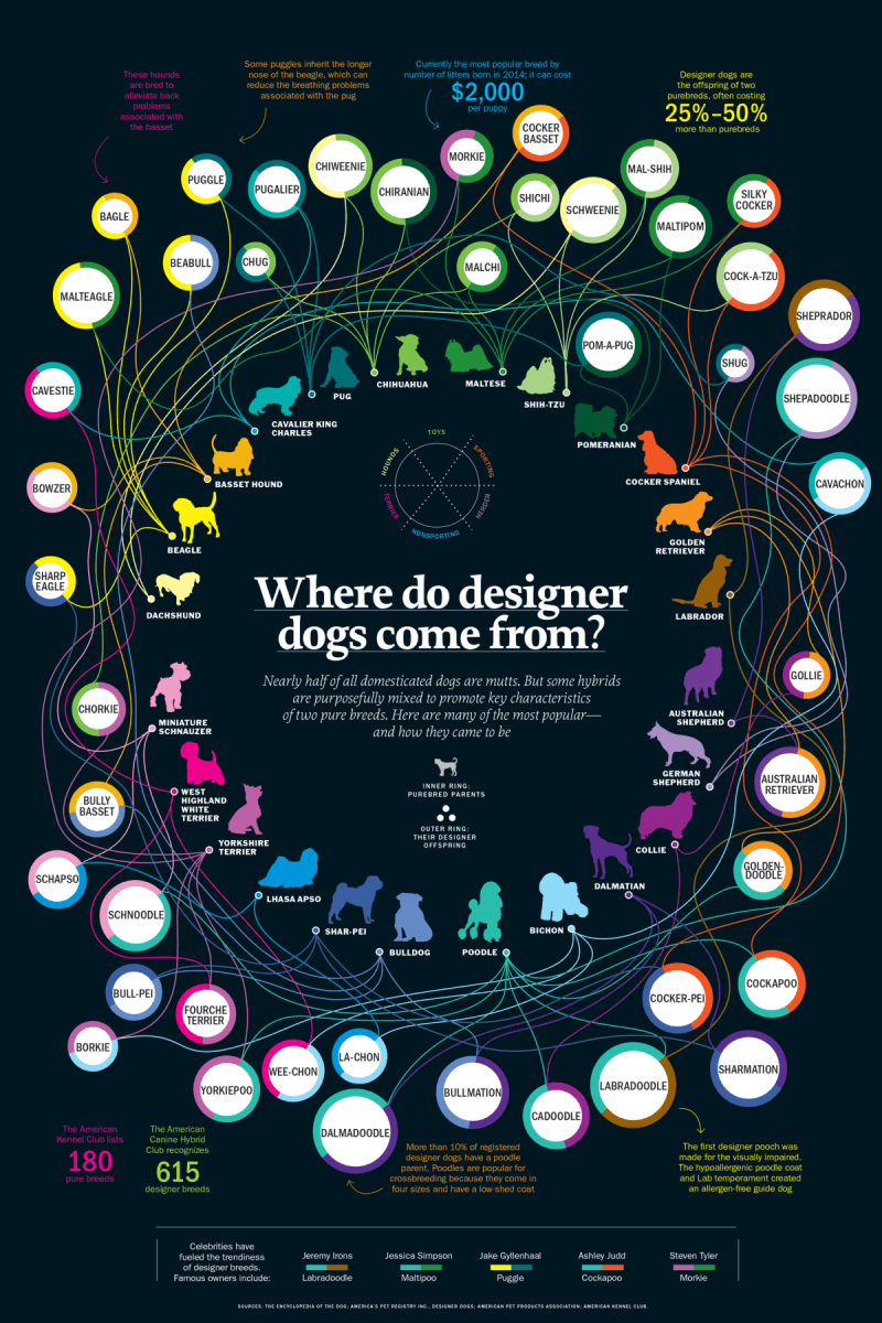 infographic of the original of designer dogs