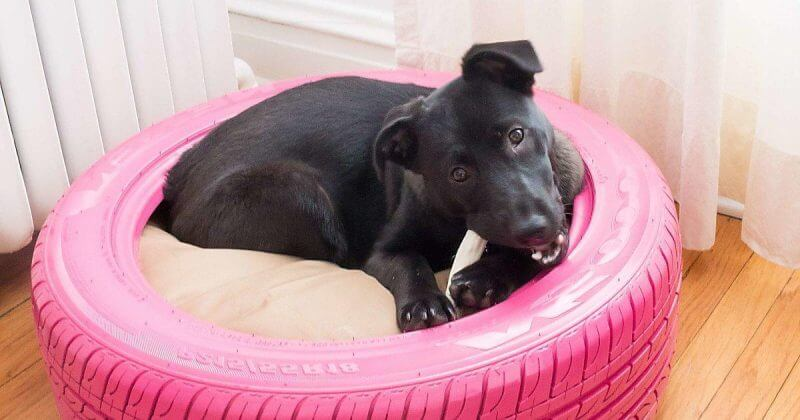 Simple DIY chew-proof dog bed.