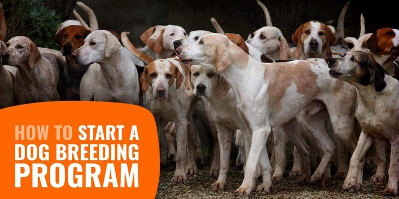 How to Start a Dog Breeding Program?