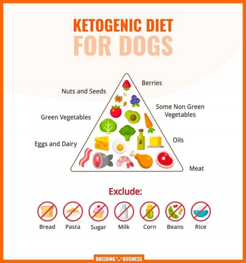 Chế độ ăn kiêng cho thú cưng