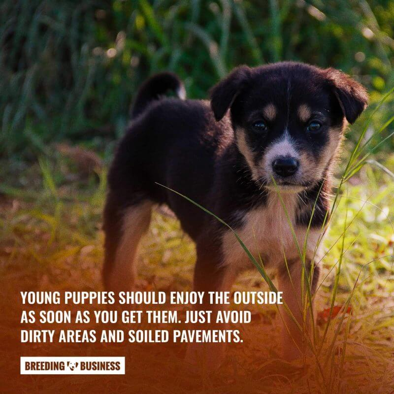 puppies vaccines outside