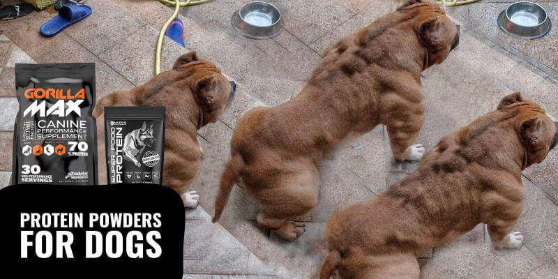 whey proteins for dogs