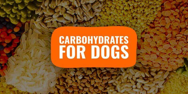 carbohydrates for dogs